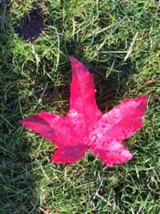Red leaf on grass seen out walking