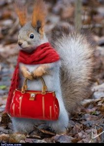 Squirrel with matching scarf and bag