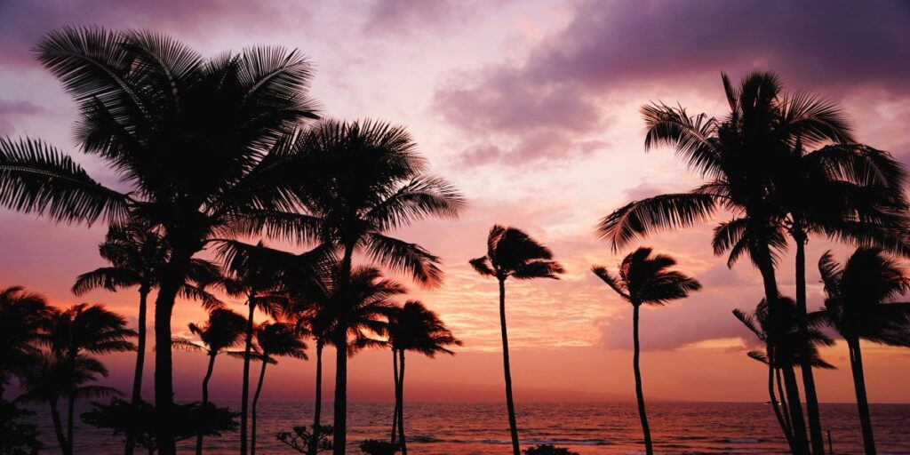 Photo of palm trees at dusk, with a pink and purple sky.